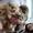 Померанский щпиц энергичные,  веселые,  звонкие #1549976