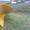 КДМ Тройка 2000 на шасси вездехода Урал,   - Изображение #7, Объявление #1167412