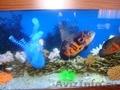 аквариумы,  рыбы, живые и искуственные растения,  декорация аквариумов