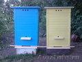 Продам пчелинные ульи