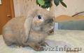 крольчат вислоухих,  крольчиху,  крола и клетку