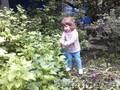 Продам сад Любитель 3 в Челябинске северо-запад