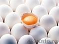 Курица, бройлер, ГОСТ, субпродукты, Объявление #1260630